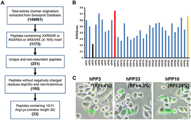 Identification of human-derived cell-penetrating peptides using in silico approach.