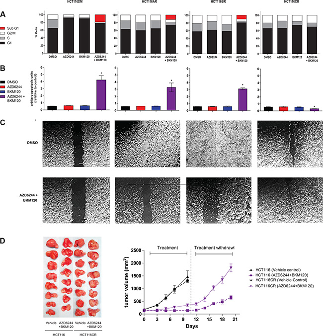 In-vitro and in-vivo phenotypes of AQR cell lines.