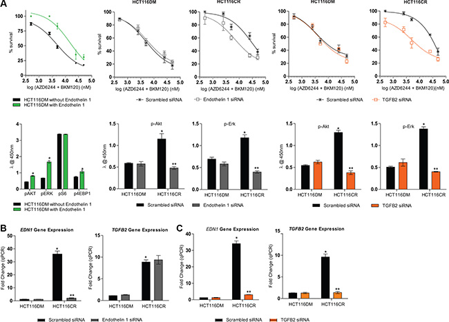 Effect of modulation of EDN1 and TGFB2 in HCT116DM and HCT116CR cells.