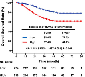 High HOXC6 expression in tumor tissues indicated poor OS.