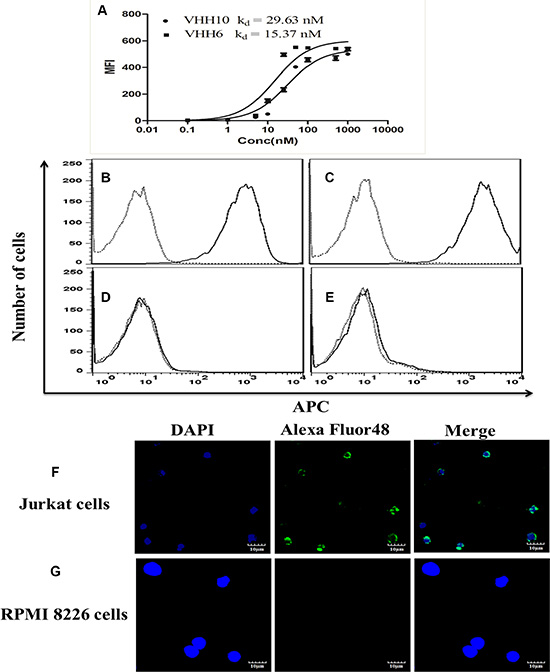 Specific binding of nanobodies to CD7-positive cells with nanomolar affinity for the cells.