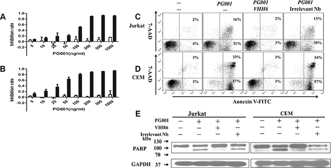 Specific induction of leukemic T-cell growth inhibition by PG001 via apoptosis in a dose-dependent manner.