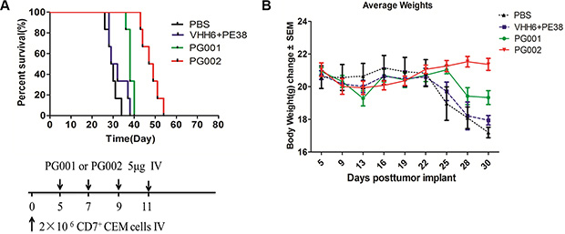 Prevention of engraftment of CEM cells in NOD/SCID mice by PG001 and PG002.