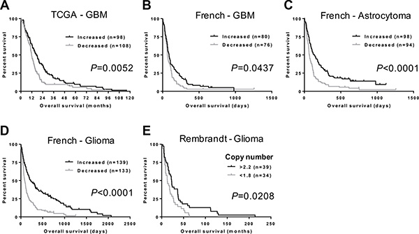 NFIB expression and copy number correlate with glioma patient survival.