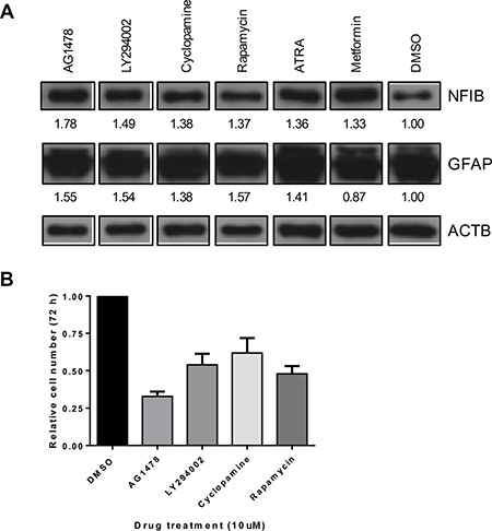 NFIB expression in GBM cells can be increased by drug treatment and is associated with reduced proliferation.