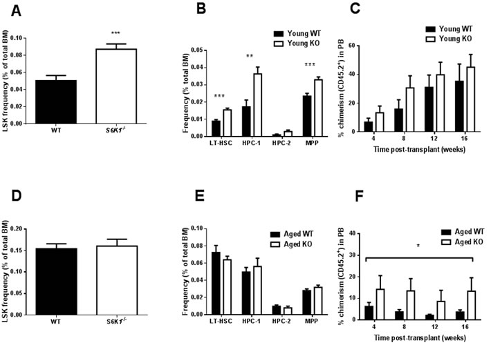 HSC frequency and function in young and aged WT and