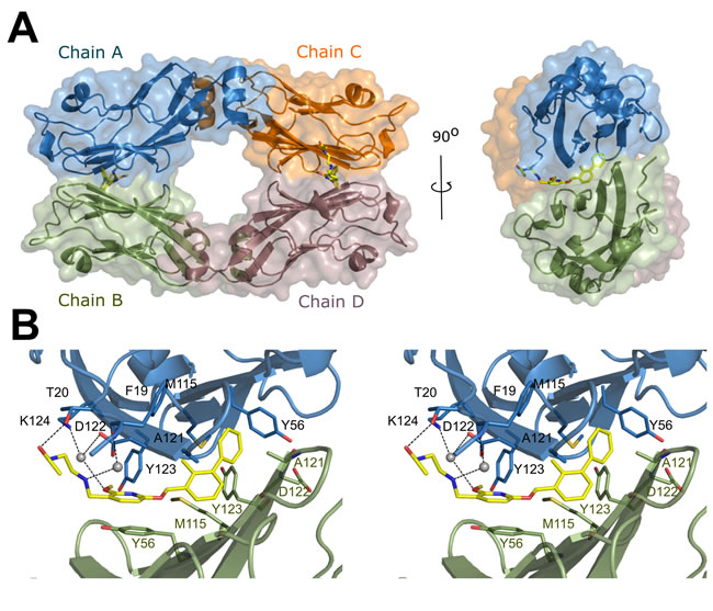 Crystal structure of BMS-202/PD-L1 complex.