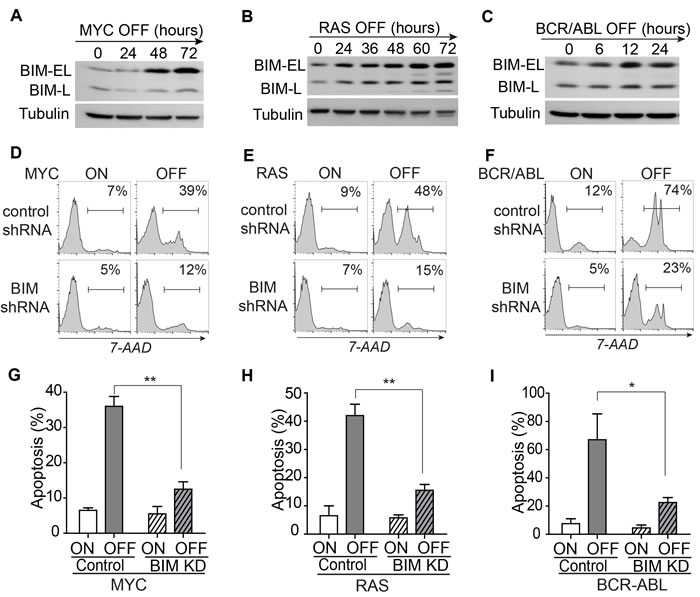 BIM mediates apoptosis induced by inactivation of the driver oncogene.