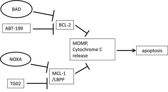 Schematic diagram.