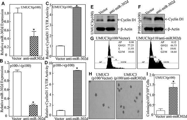 Inhibition of miR-302d reversed p100 attenuation of Cyclin D1 protein expression, anchorage-independent growth, and promoted G0/G1 cell-cycle progression.