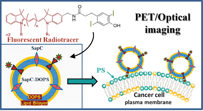 Schematic representation of phenol-substituted, iodinated lipophilic dyes conjugated to tumor-targeted SapC-DOPS nanovesicles for dual imaging of glioblastoma.