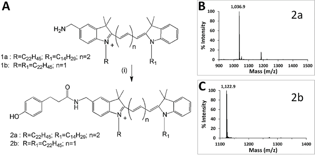 Synthesis and characterization of phenol-substituted dye analogs.