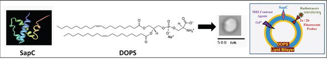 Structure of SapC-DOPS nanovesicles.