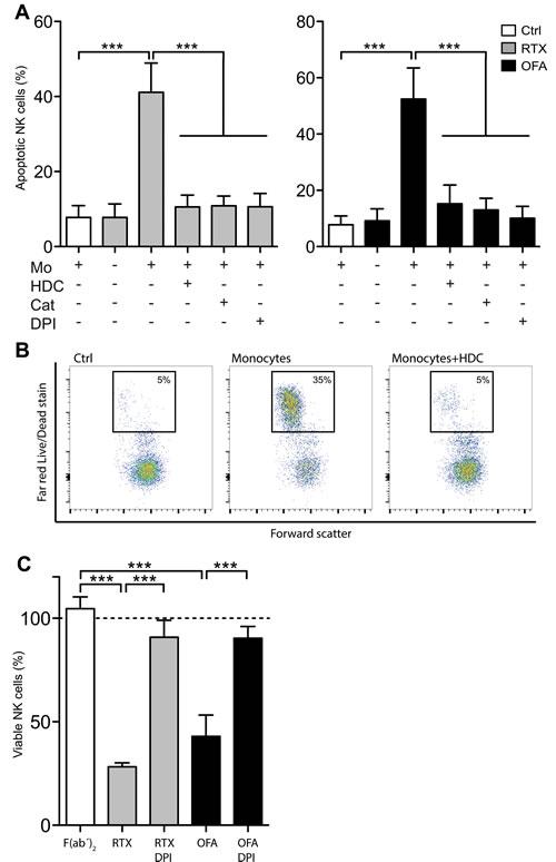 CD20 antibodies induced ROS-dependent NK cell apoptosis.