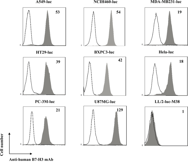 Expression of B7-H3 on different human tumor cells.