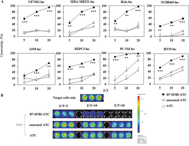 Cytotoxicity effects of B7-H3Bi-armed ATC against different tumor cells.