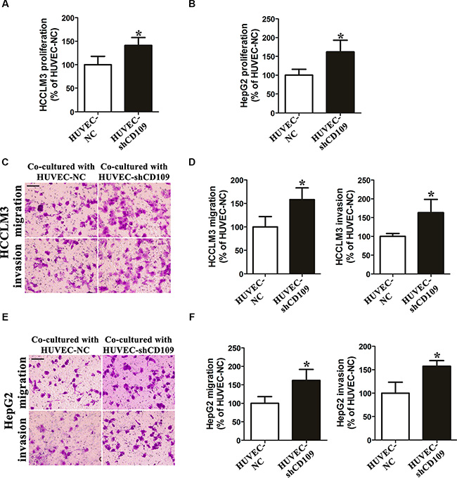 CD109 knockdown in HUVEC enhanced paracrine effects on hepatoma cells proliferation, migration, and invasion in vitro.