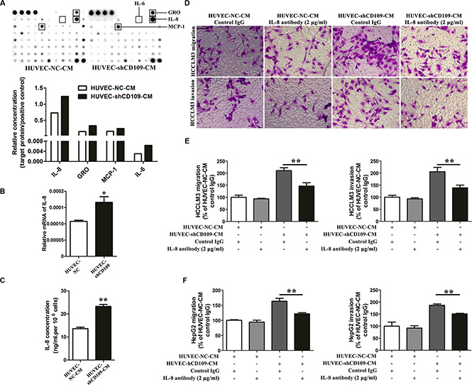 IL-8 mediated the tumor-promoting role of CD109 knockdown in HUVEC.