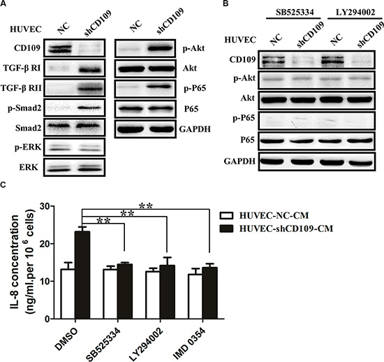 CD109 knockdown upregulated IL-8 expression through activation of TGF-β/Akt/NF-κB pathway in HUVEC.