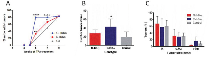 Tumors developed in C-and N-IKKα/TgAC and Control/TgAC mice.