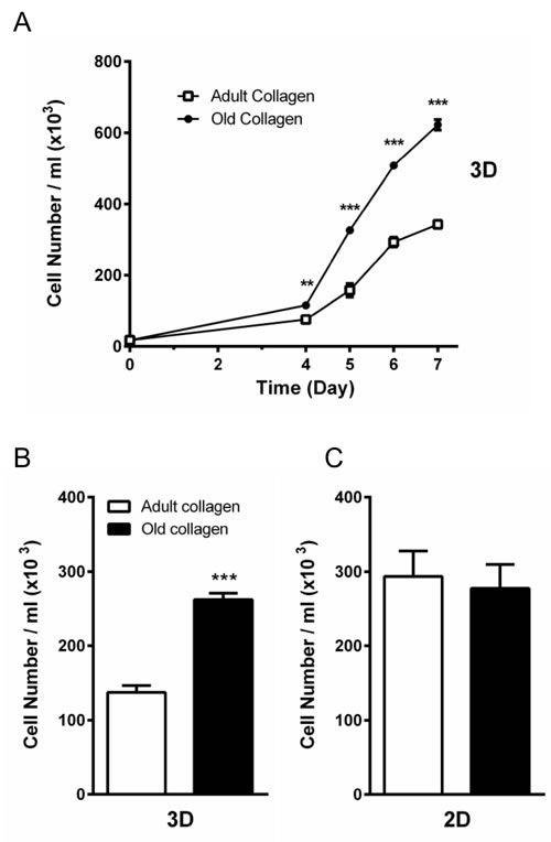 Effect of collagen aging on HT-1080 cell proliferation in 2D and 3D matrices.