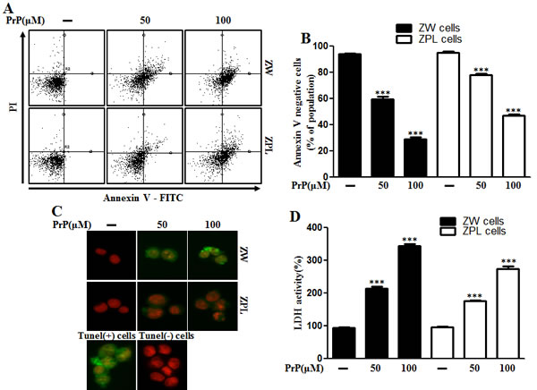 Autophagy and neurotoxicity by PrP (106-126) treatment was inhibited in PrnP deficient cells.