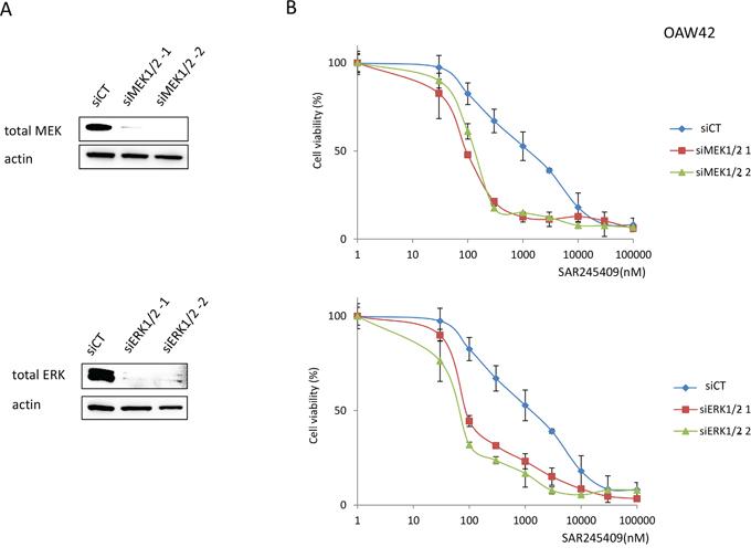 Enhanced sensitivity to SAR245409 by MEK1/2 or ERK1/2 knockdown.