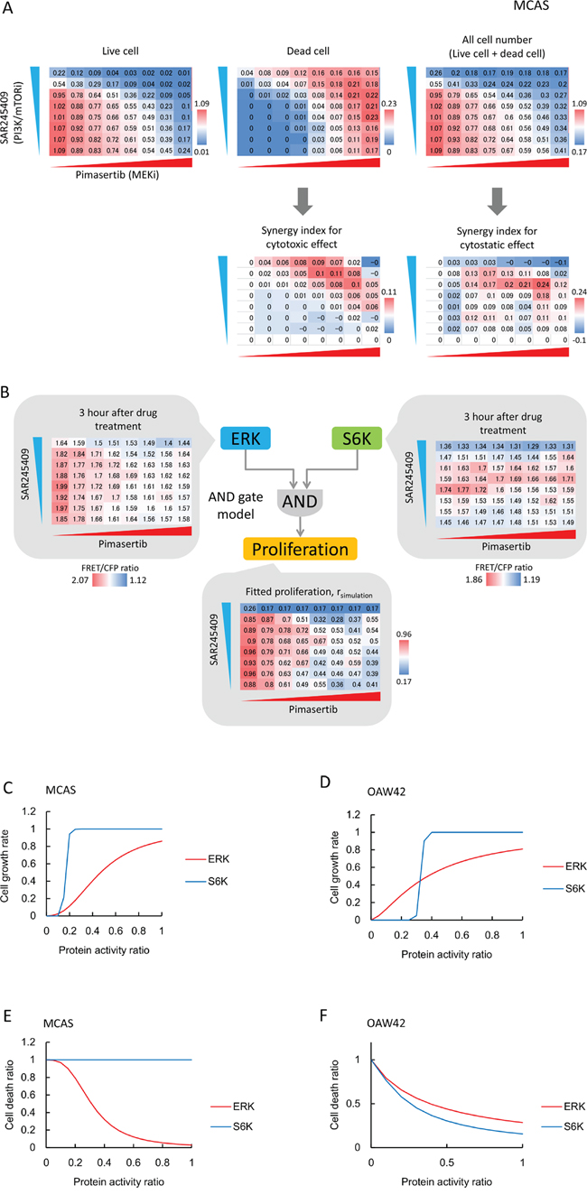 S6K and ERK roles in cell proliferation and cell death are cell-line dependent.