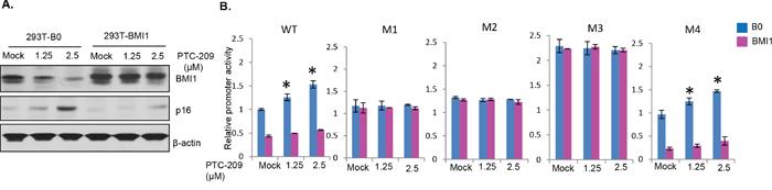 Oncotarget   A miR-200c/141-BMI1 autoregulatory loop regulates