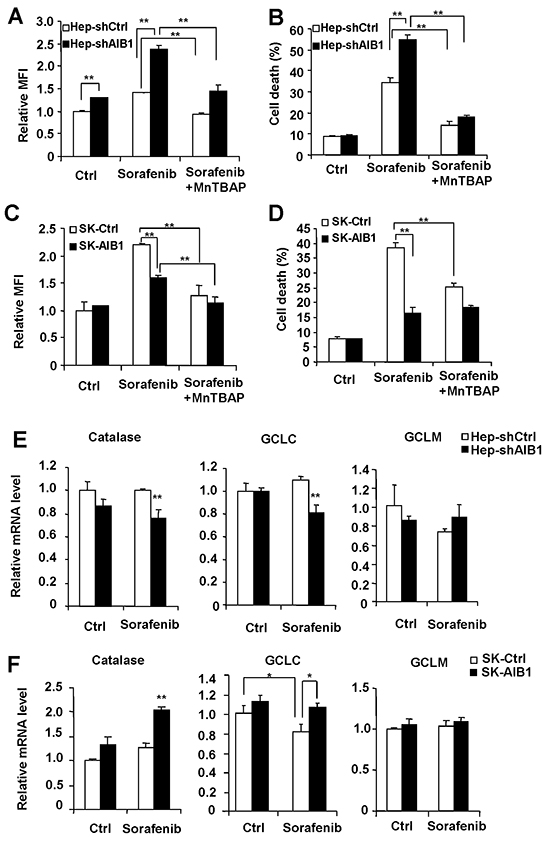 Downregulation of AIB1 contributes to sorafenib-induced cell death through increasing the levels of intracellular ROS in HCC cells.