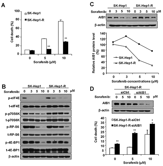 Resistance to sorafenib-mediated downregulation of AIB1 protein contributes to the acquired resistance of HCC cells to sorafeinb-induced cell death.