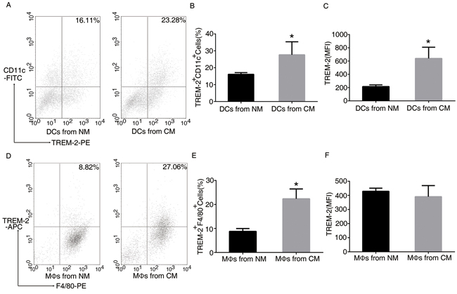 TREM-2 on bone marrow-derived DCs and MΦs was induced by conditional medium (CM).