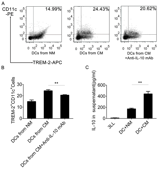 IL-10 induced TREM-2+DCs in CM.
