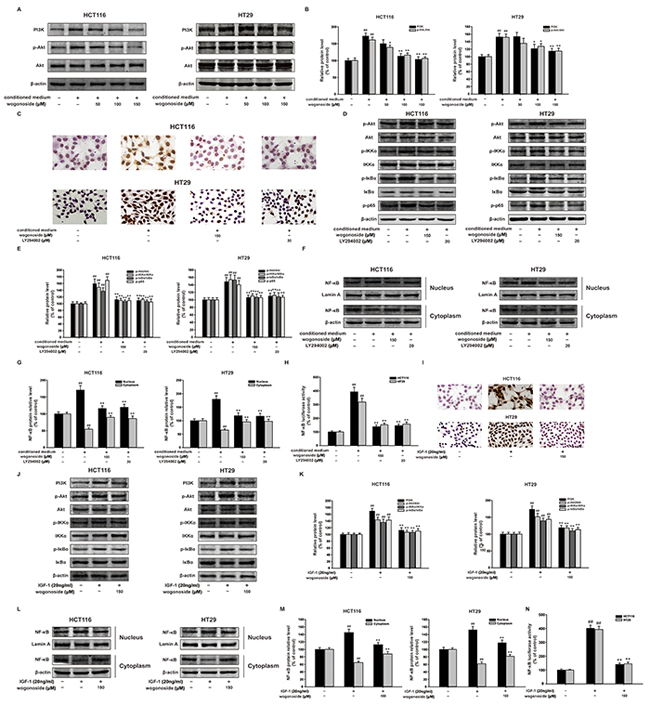Wogonoside inhibited the proliferation of human colon cancer cells exposed to the conditioned media from LPS-activated THP-1 cells via inhibition of NF-κB activation through PI3K/Akt pathway.