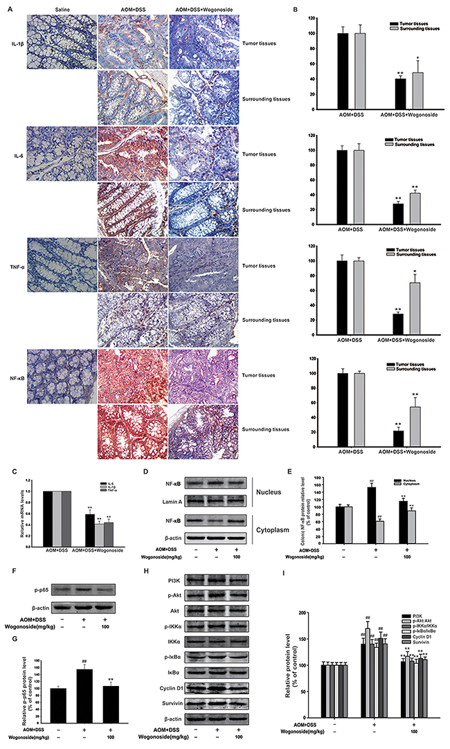 Wogonoside reduced production of pro-inflammatory cytokines and inhibited NF-κB activation via regulating PI3K/Akt pathway in AOM/DSS-induced adenocarcinoma.
