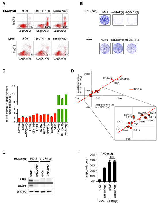 URI1-dependent CRC cells are also dependent on the α-class PFD STAP1.