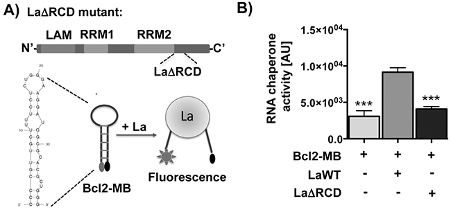 The RNA chaperone La assists structural changes of the Bcl2 translation start site in vitro.