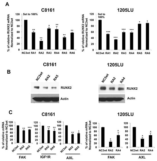 U1 Adaptor oligonucleotides targeting RUNX2 inhibit RUNX2 and RTK expression.