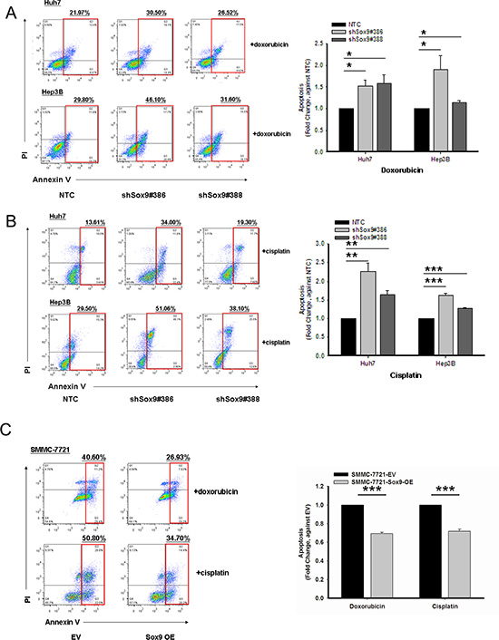 Sox9 confers chemoresistance in HCC.