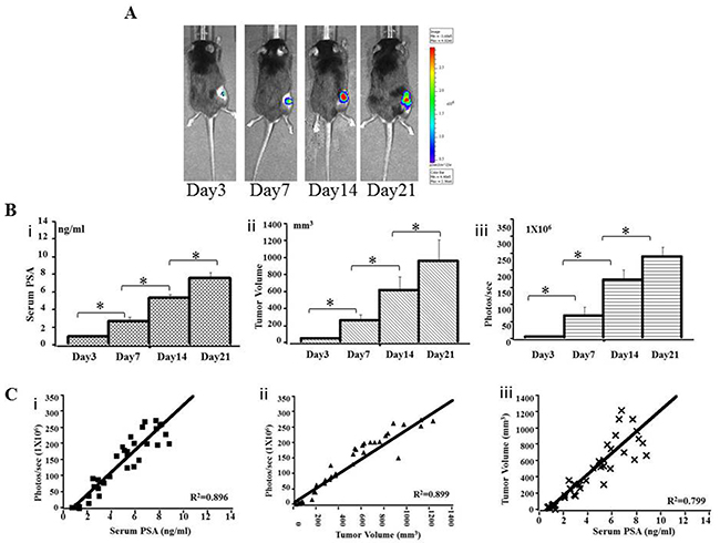 Preclinical subcutaneous mouse models using RM9-Luc-pIRES-KLK3 cells (n = 7)