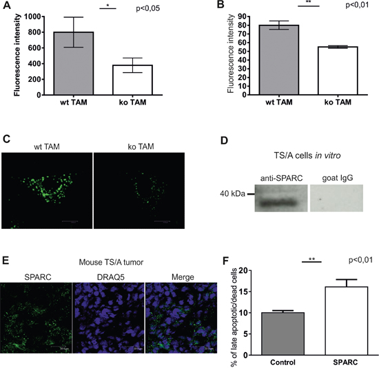 Endocytic clearance function is impaired in stabilin-1 knockout TAM.