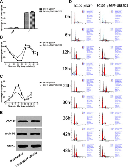 Effects of UBE2D3 overexpression on the cell cycle with or without IR in EC109 cells.