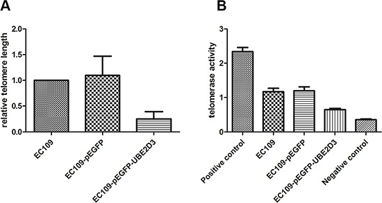 UBE2D3 overexpression shortened telomere length and decreased telomerase activity.