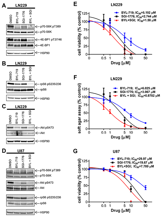 Effects of simultaneous inhibition of PIM and PI3K on cell viability and transformation of GBM cells.
