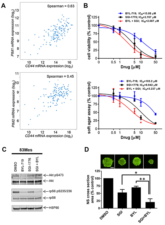 PIM kinase targeting enhances the inhibitory effects of PI3K inhibitors on patient-derived GSCs.
