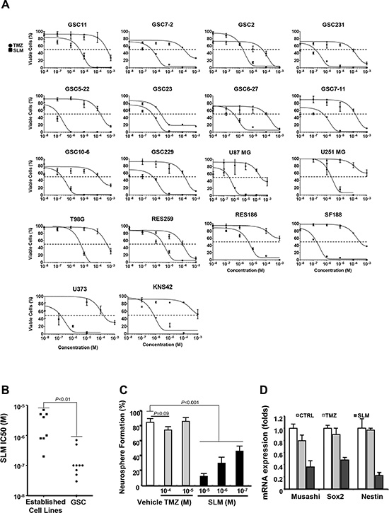 SLM exerts a potent anti-glioma effect in vitro and reduces GSC self-renewal capacity.
