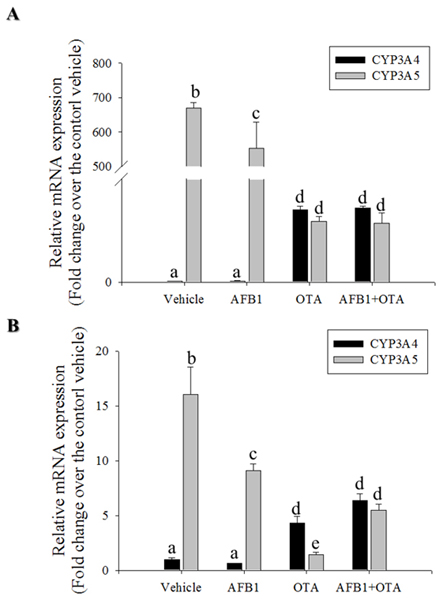 Effects of OTA and AFB1 on intestinal CYP3A.