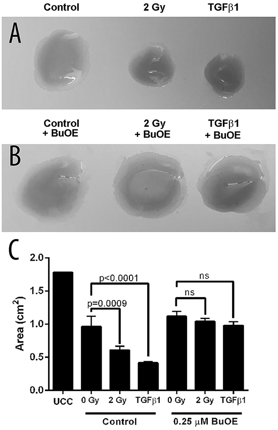 MnTnBuOE-2-PyP prevents contraction of collagen by primary colorectal fibroblasts.