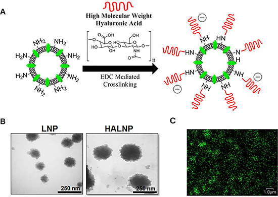 Hyaluronic acid (HA) decorated lipid nanocarrier fabrication overview and characterization.