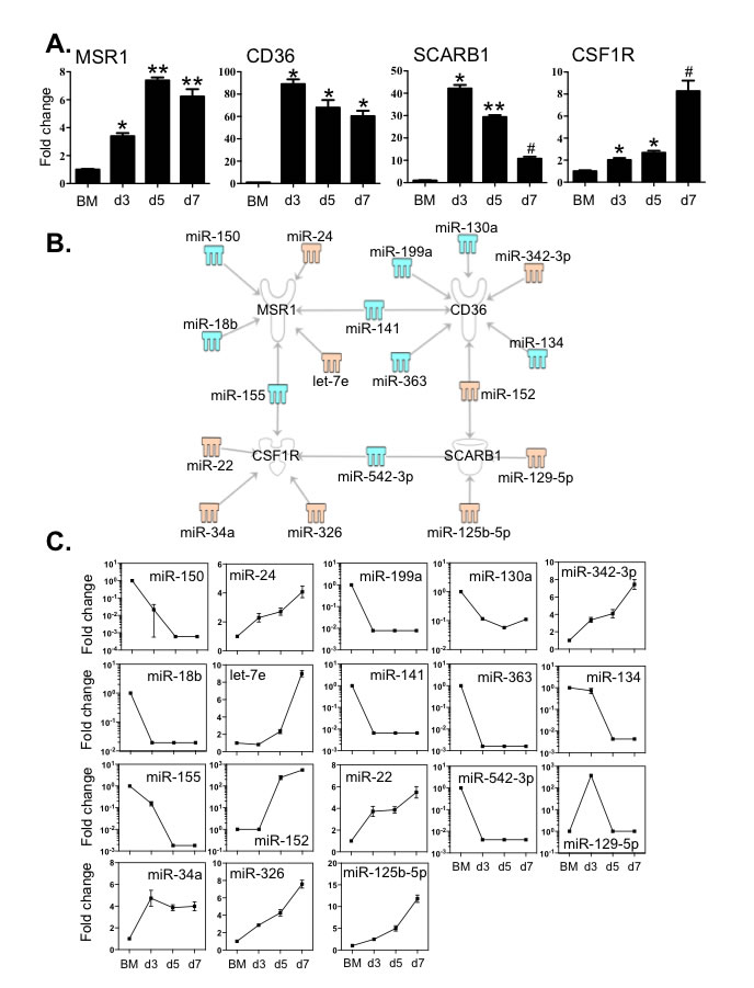 Expression levels of key macrophage receptors correlated with the expression of miRNAs that potentially target these transcripts.